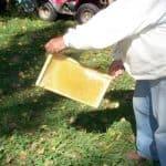 One frame full of honey.