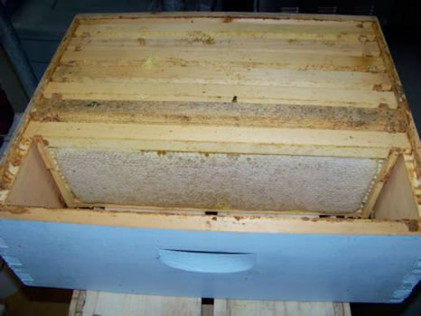 Bee box with frames full of honey