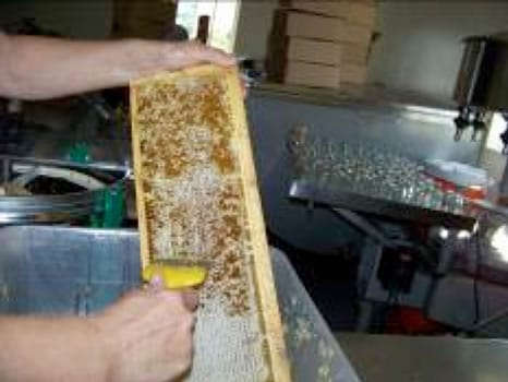 Scraping the wax cap so the honey can run out